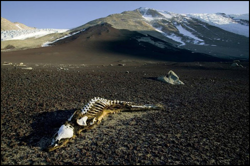antarctica_skeleton.jpg