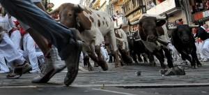 bulls4