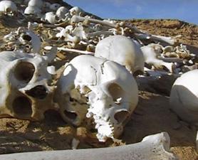 cambyses-skulls2